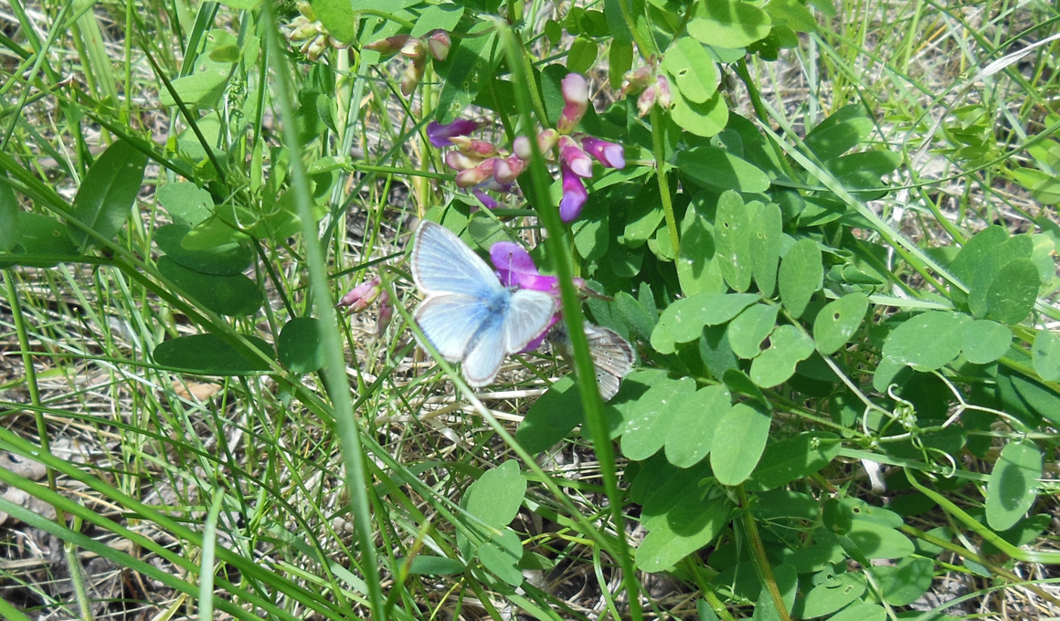 monitoring_butterfly